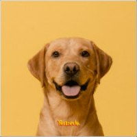 "Tomode - ""Golden Retriever"""